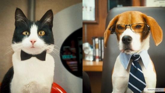 Бизнес идея: Производство кормов для собак и кошек