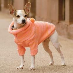 Производство одежды для животных