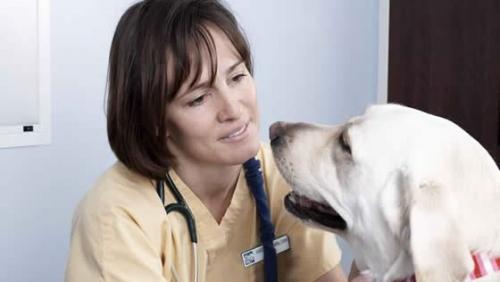 Как открыть ветеринарную клинику