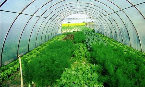 Как заработать в домашних условиях на выращивании зелени